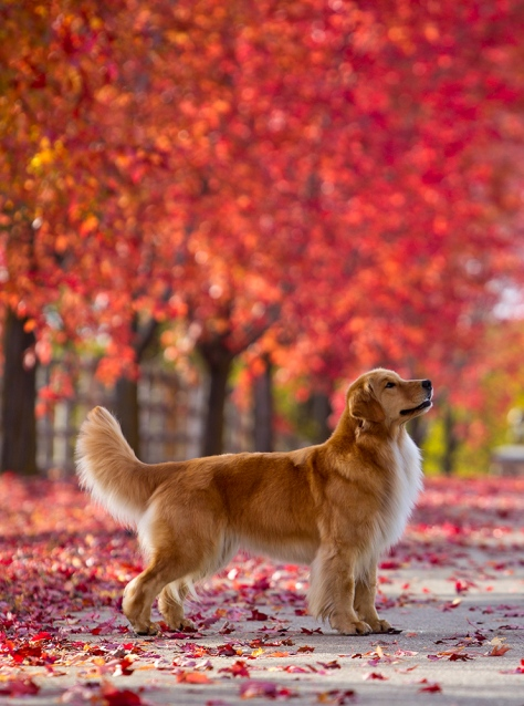 Fall_Goldens_a