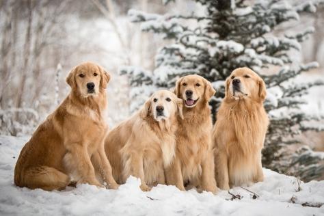 Snowy_Pups_12713_0235