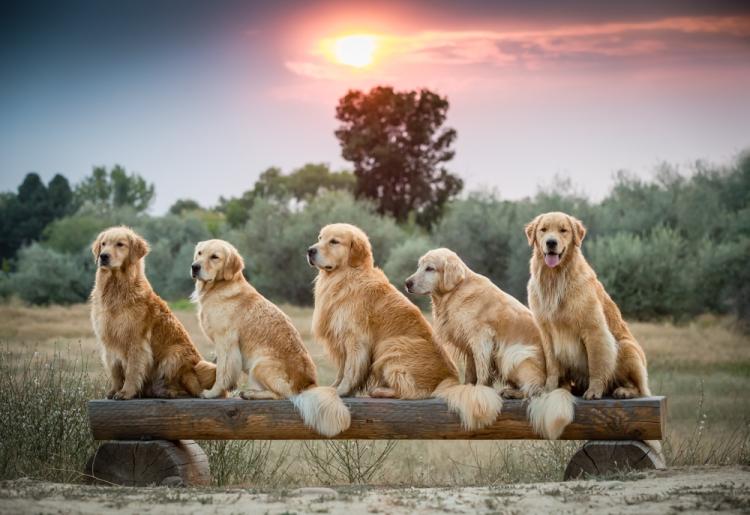 dogs_sunset-1